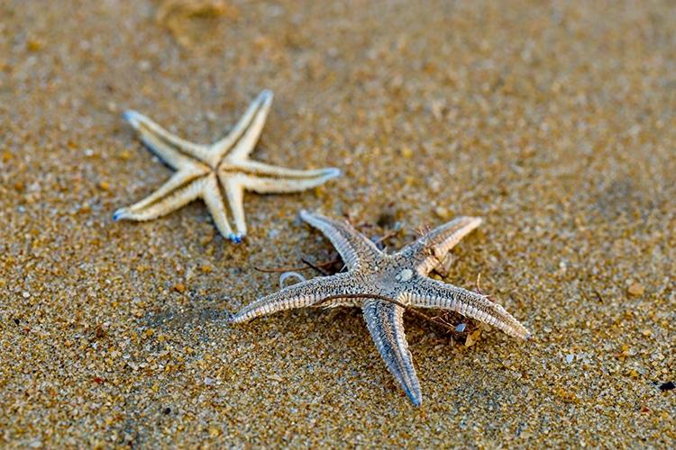 Starfish Lying on the Beach