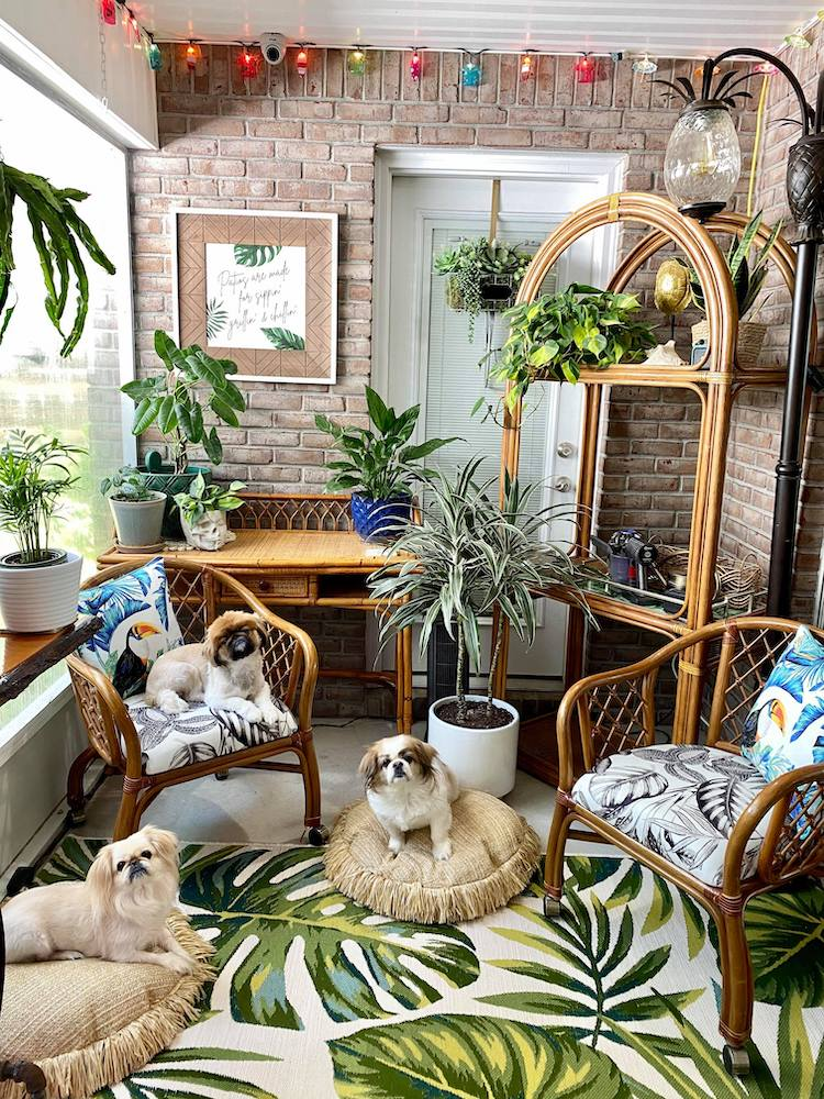 Interior With 3 Dogs and Vintage Decor
