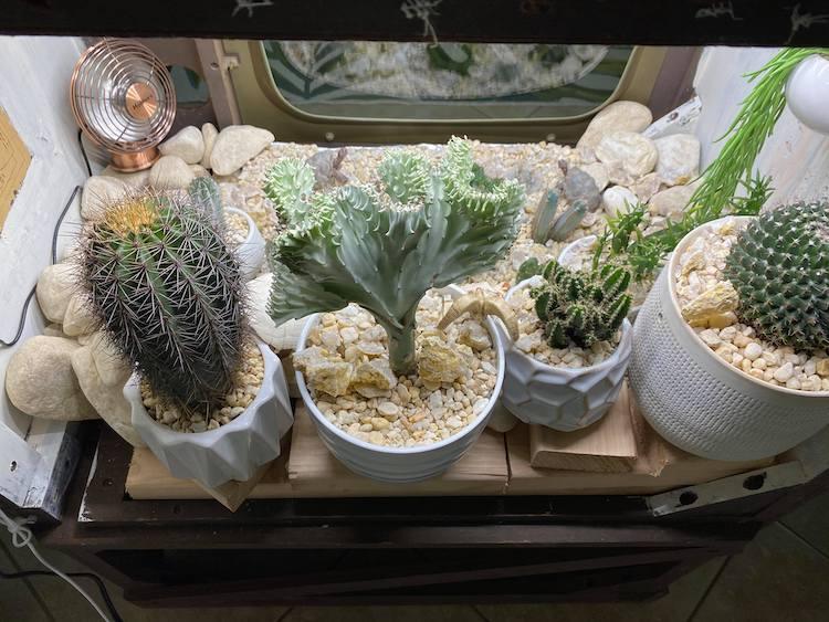 Television Terrarium With Cacti In It