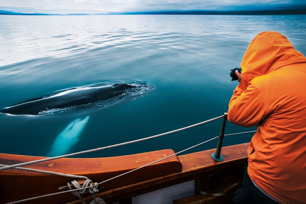 Close encounter with a humpback whale © North Sailing