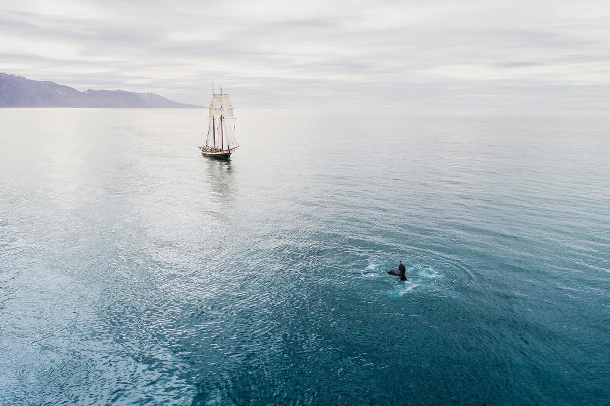Hybrid-electric sailboat Opal whale watching © Nick Bondarev