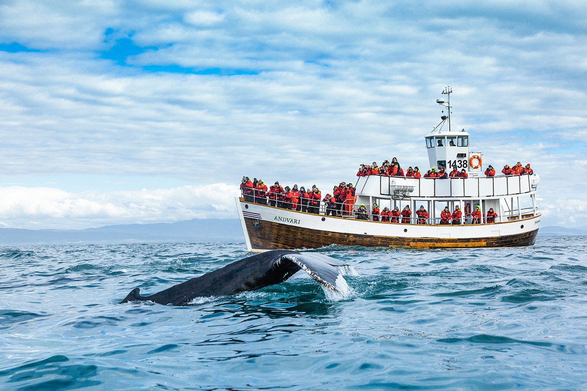 North Sailing Eco Whale Watch Electric Boat Tours