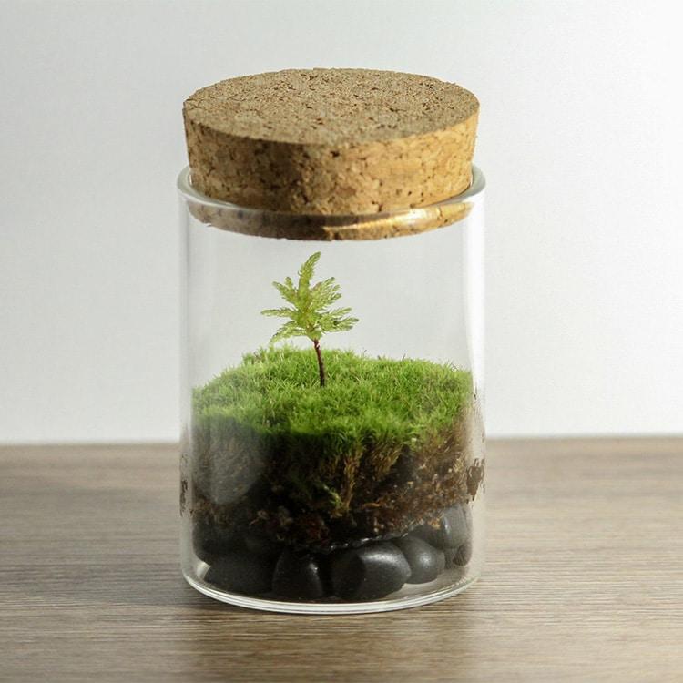 Gardening Grow Kit