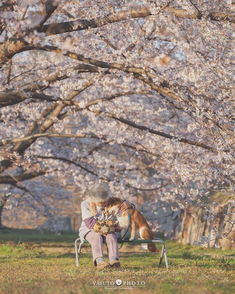 abuelita con shiba inu en japón por YASUTO