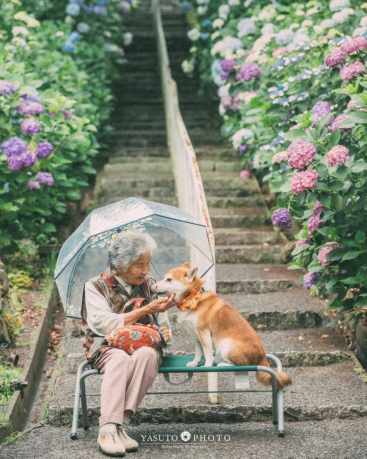 Grandmother With Shiba Inu Photos by YASUTO