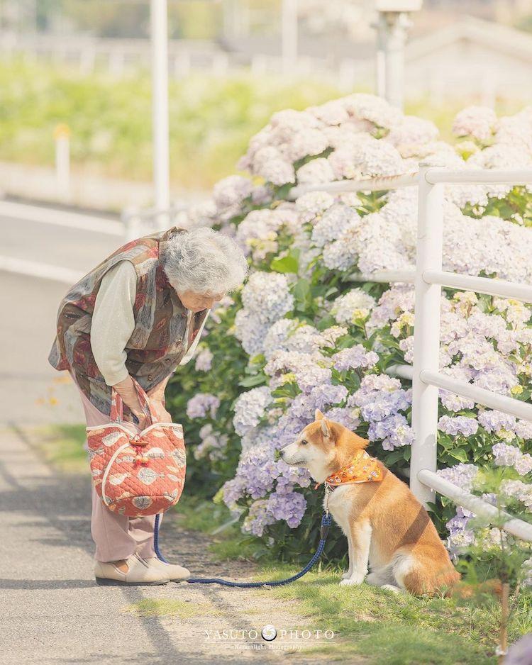 abuela con shiba inu en japón por YASUTO