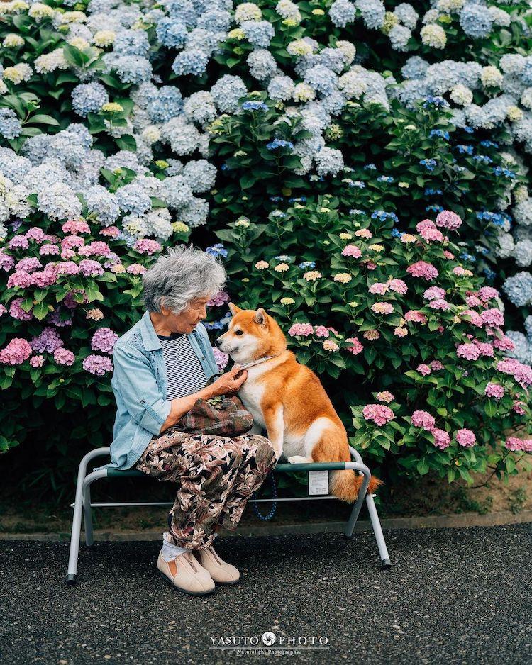 abuelacon shiba inu en japón por YASUTO
