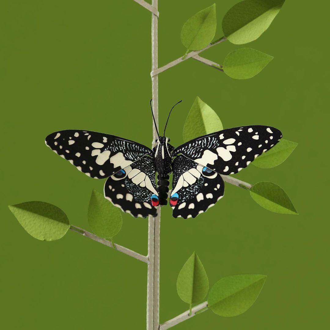 Paper Butterfly Sculptures by Diana Beltrán Herrera