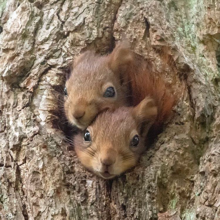 Squirrel Photos by Johnny Kääpä