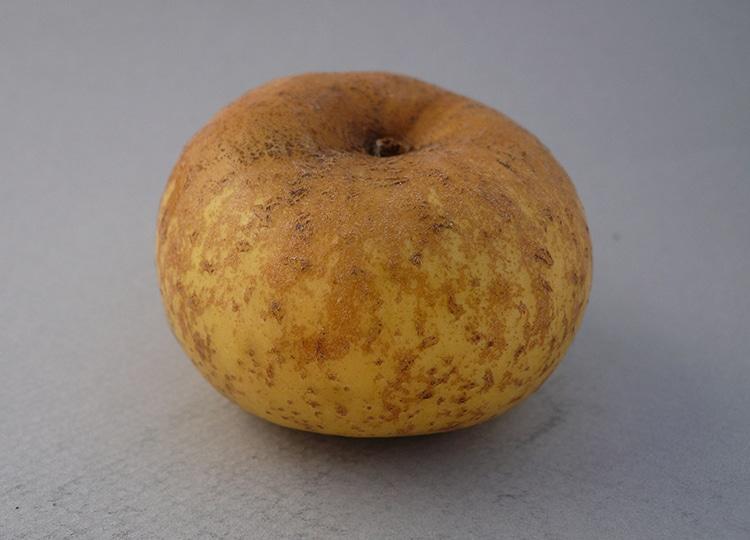 manzana Gruff