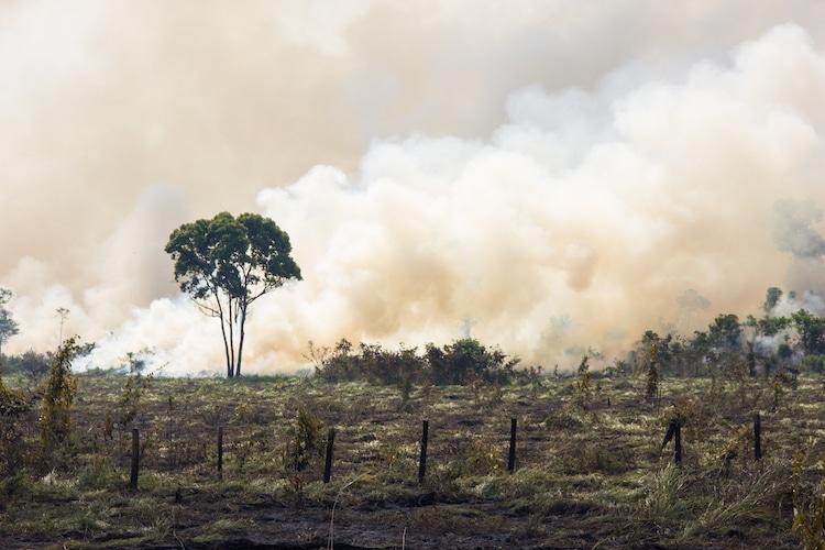 Burning the Brazilian Rainforest