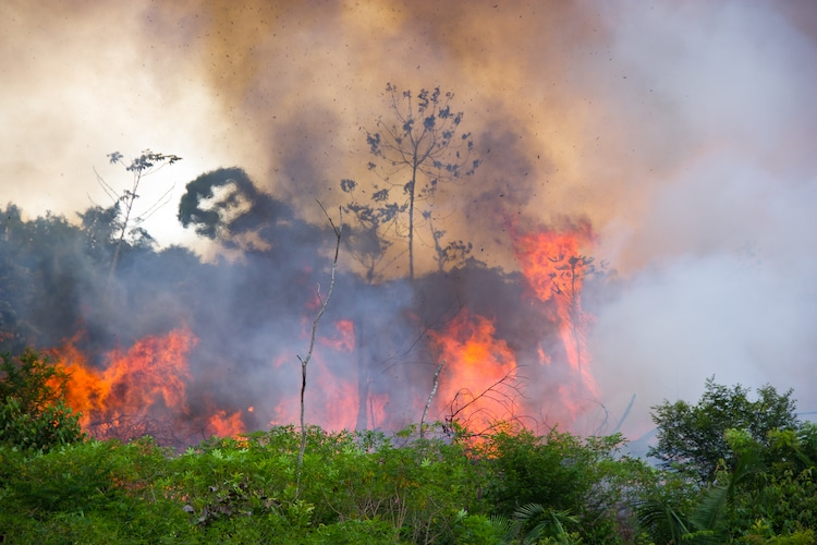 Fire in the Amazon Rainforest