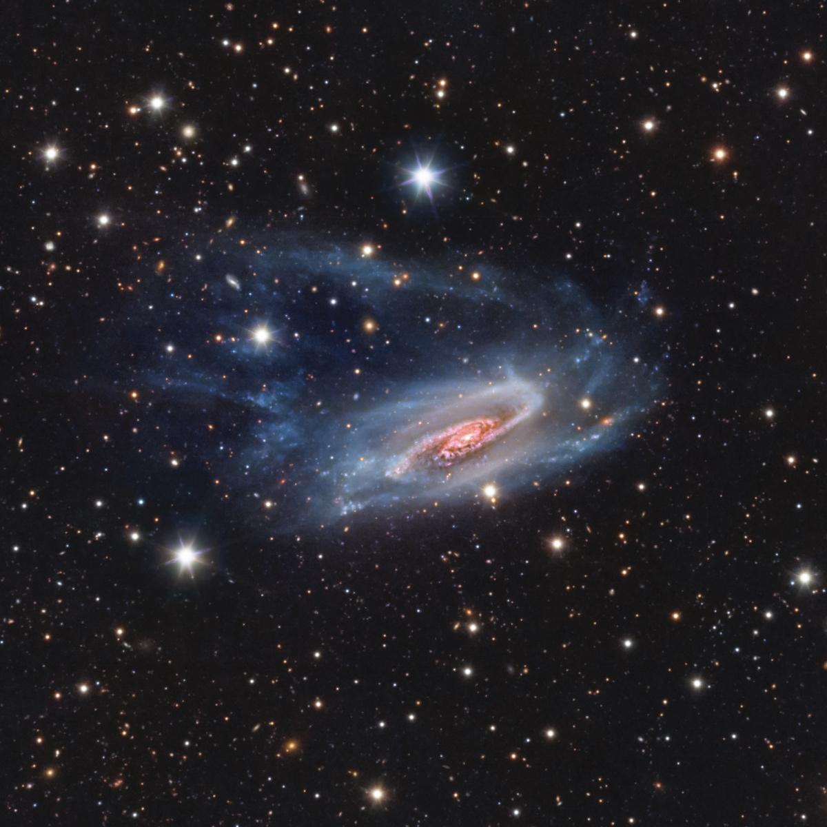 """""""NGC 3981"""" par Bernard Miller (USA)"""