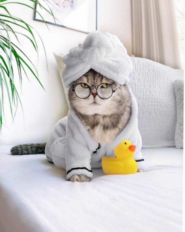 Benson the Cat in Cute Outfits