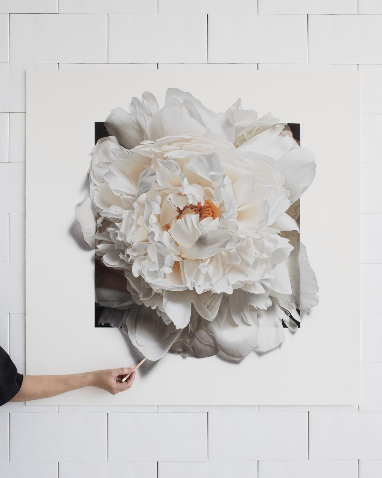 Floral Colored Pencil Drawings by CJ Hendry