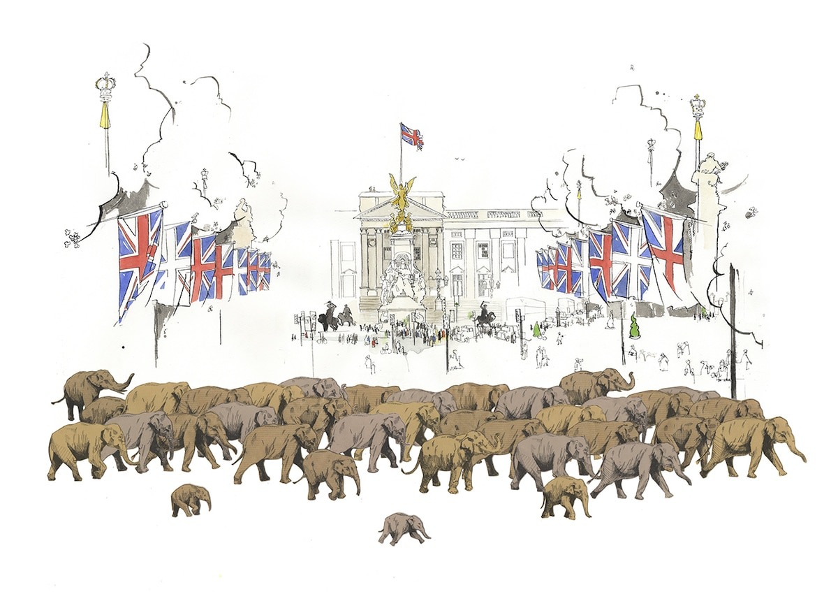 Elephant Drawings by George Butler
