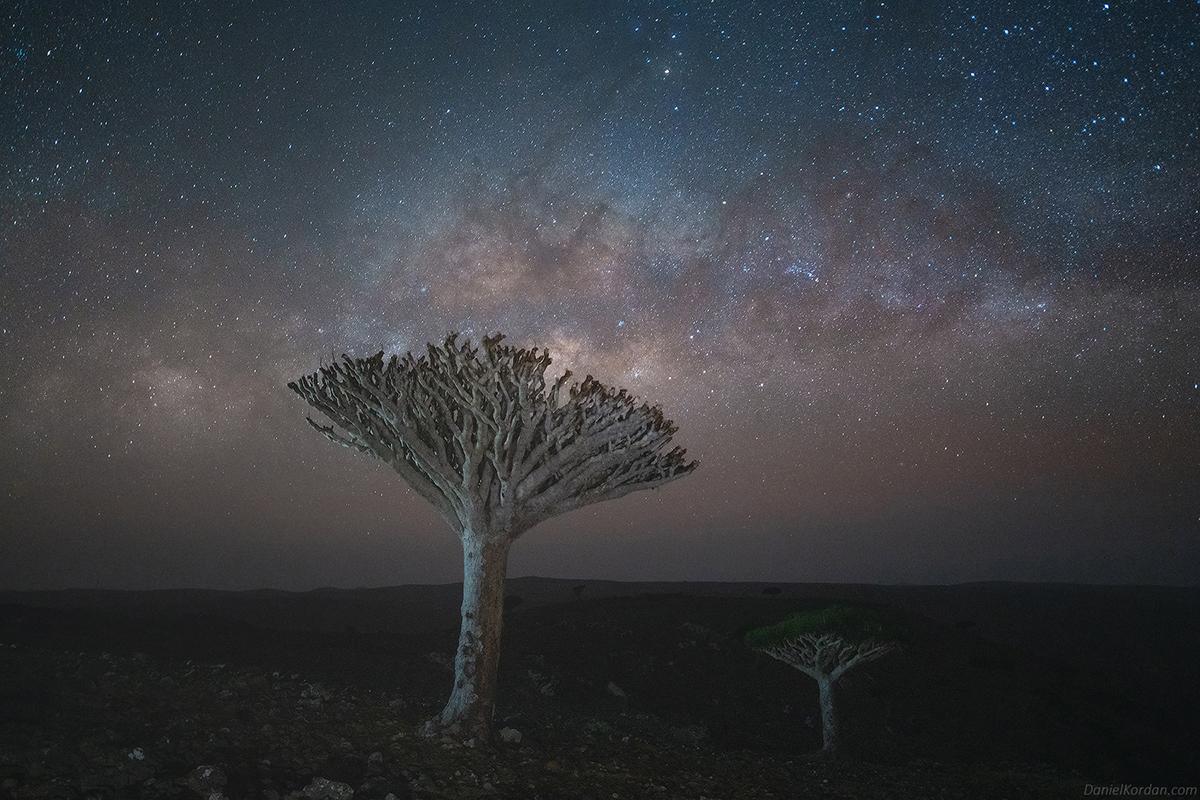Fotos de un árbol de sangre de dragón en Socotra de Daniel Kordan