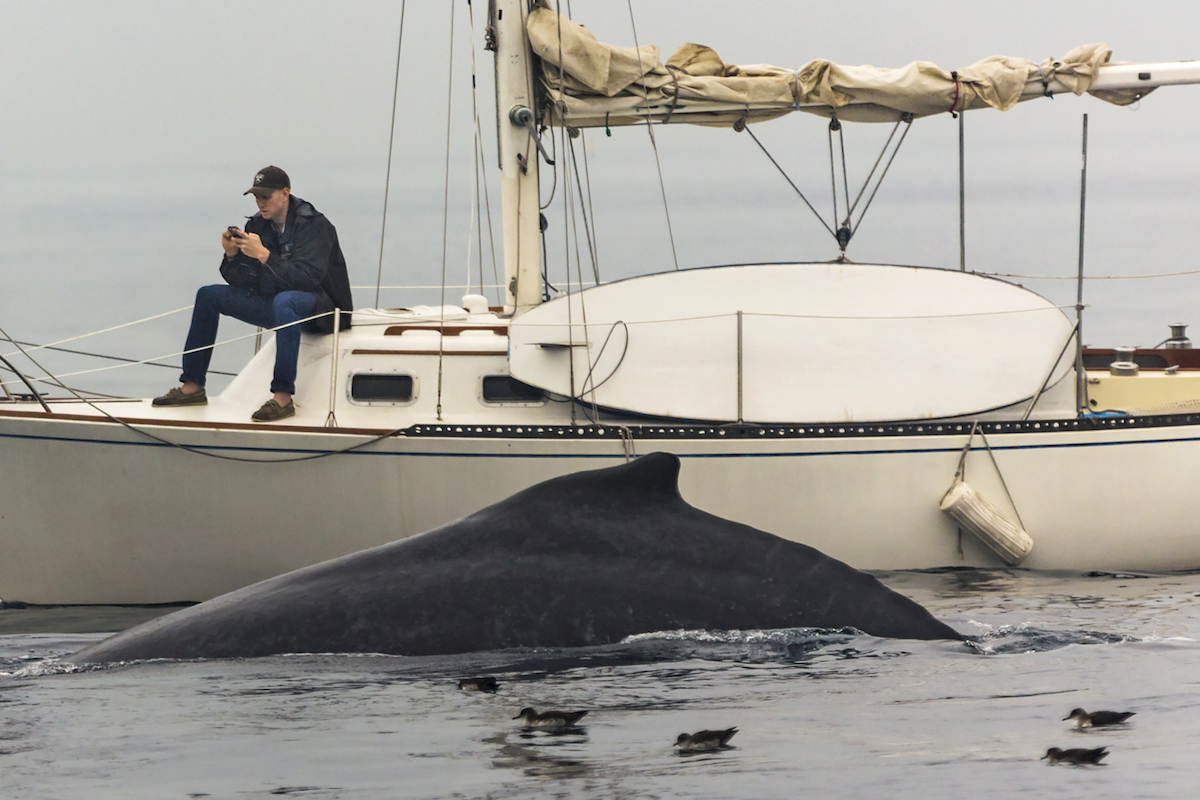 Man on Cell Phone Ignoring Whale in the Water by Eric J Smith