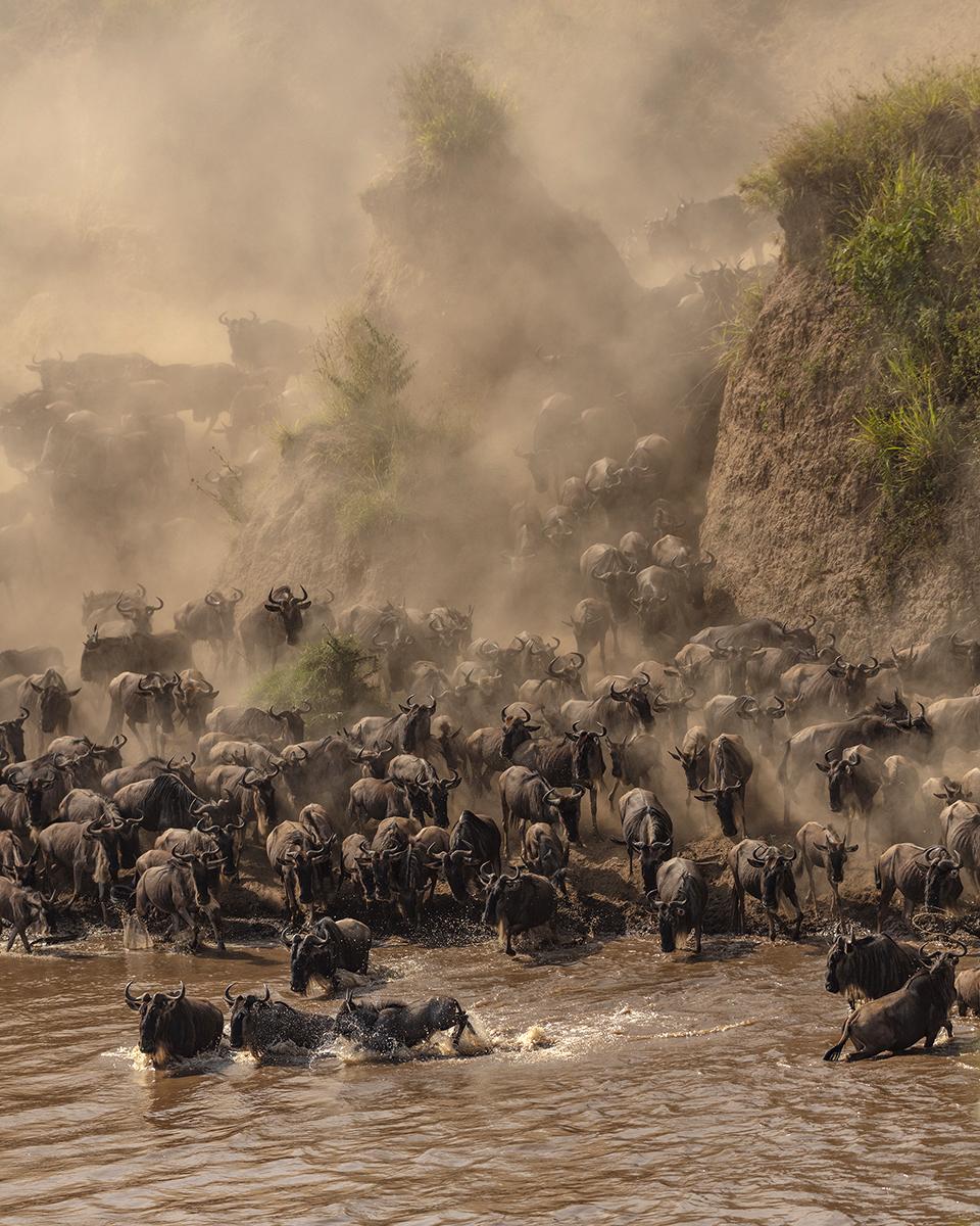 Wildlife Photography by Eric J Smith