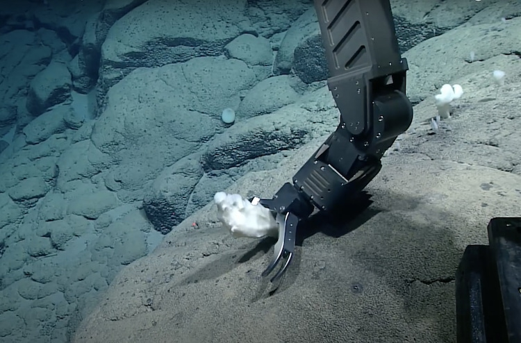 ROV collecting glass sponge off the Rockaway Seamount