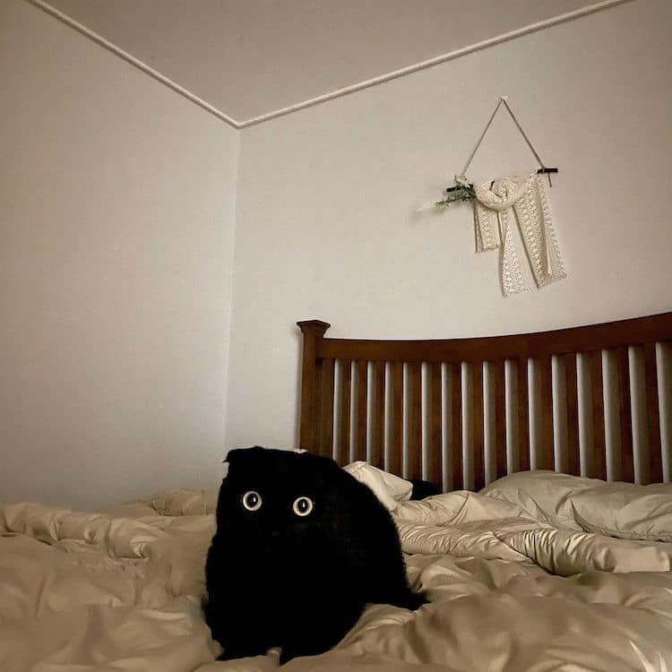 Black Cat Munji