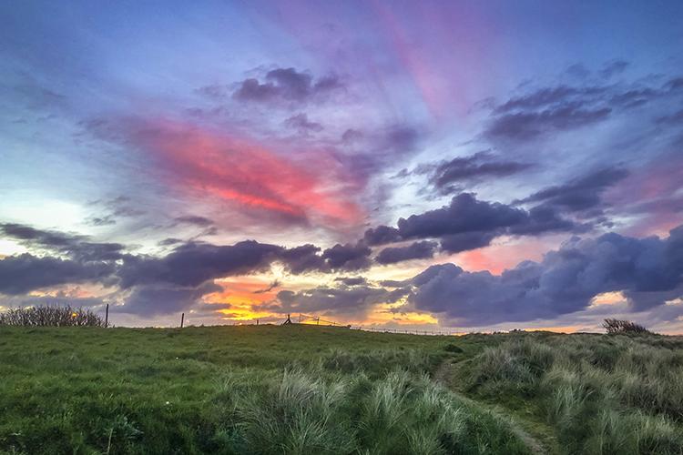 County Meath Rewilding Ireland