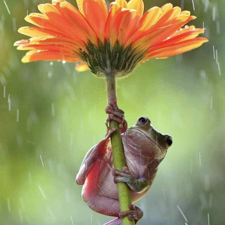 Frog Photos by Ajar Setiadi