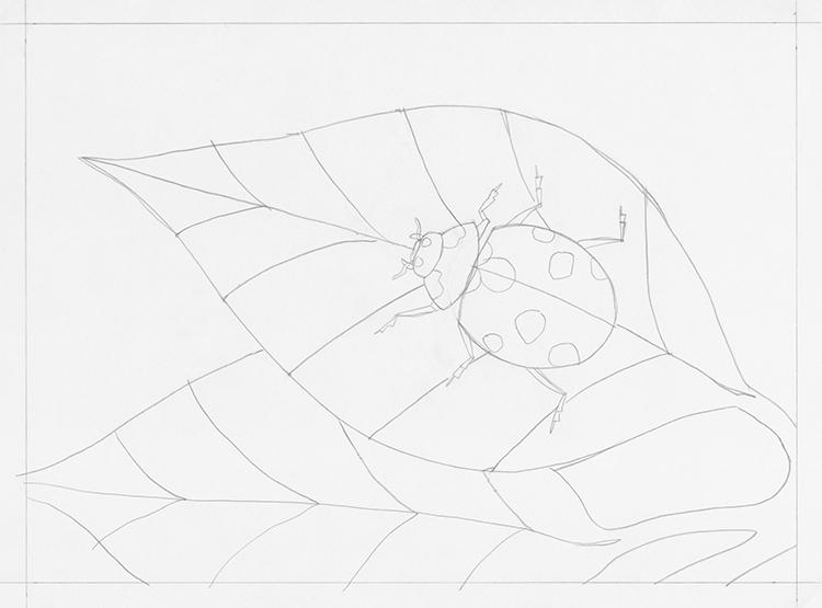 How to Draw a Ladybug