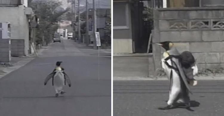LaLa the Penguin on the Streets of Japan