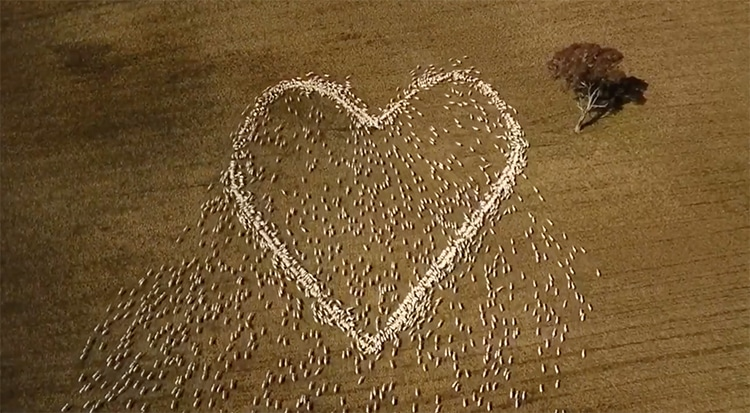 """Australian Farmer Uses His Sheep Herd to Express Love and Grief With a """"Heart"""""""