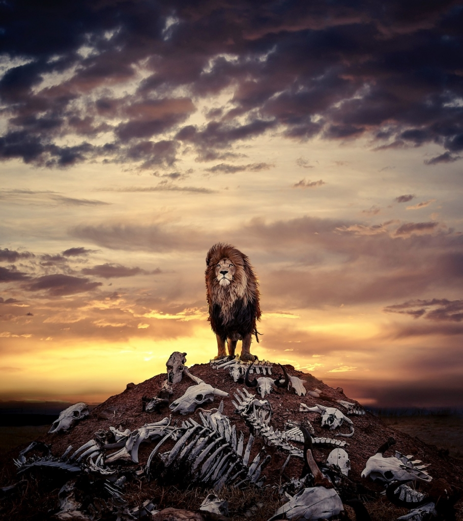 Lion Standing on Pile of Bones by Simon Needham