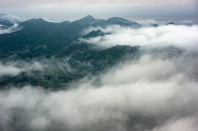 Reforestation Increases Cloud Cover, Which Cools the Planet's Climate