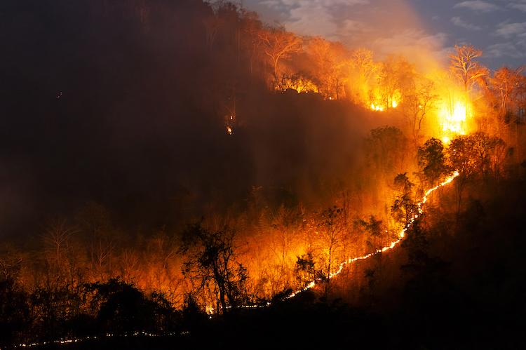 Feux de forêt provoqués par le réchauffement climatique