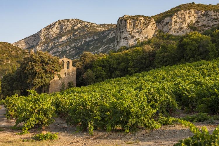 Vignoble Languedoc-Roussillon
