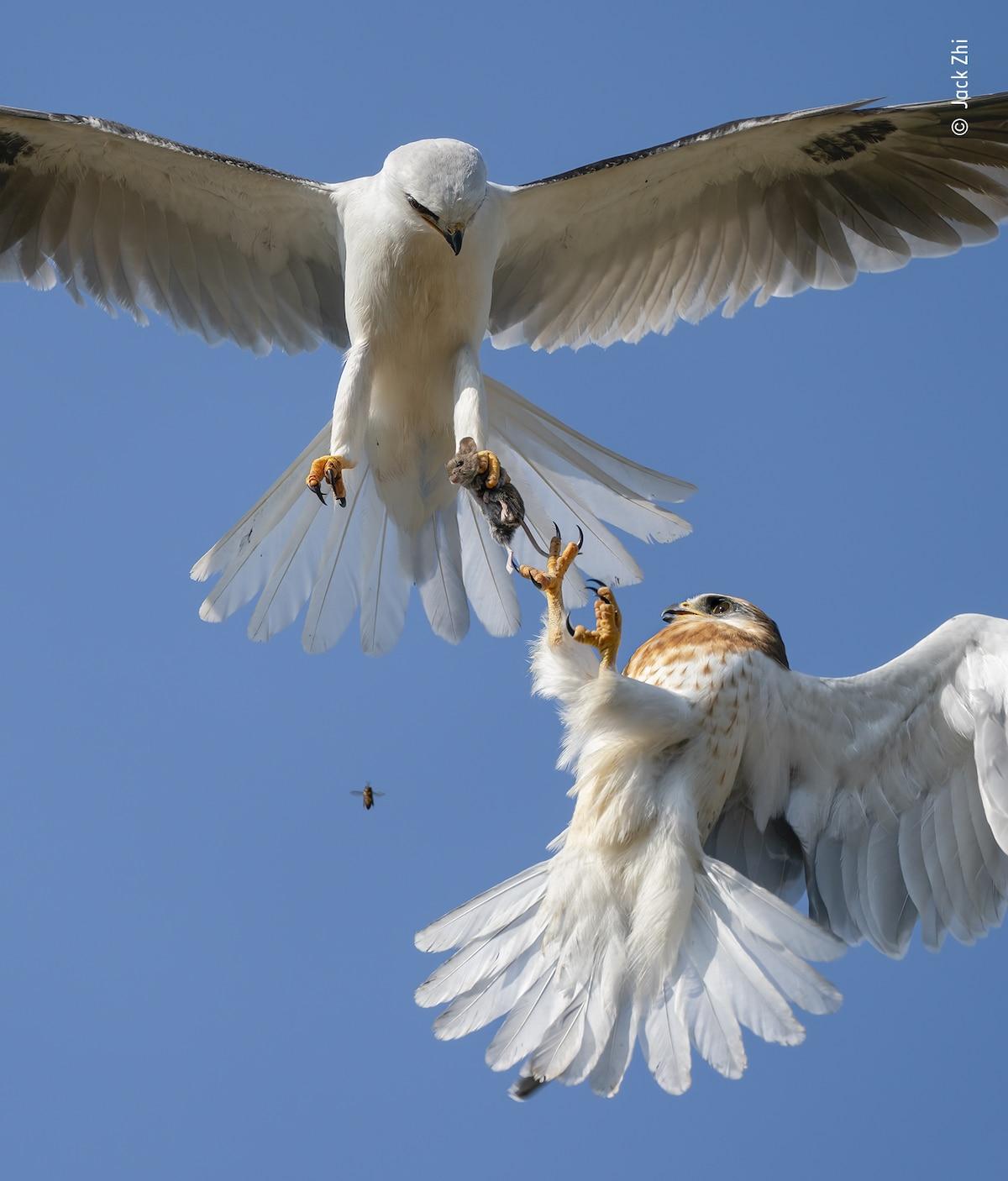 Oiseau et souris
