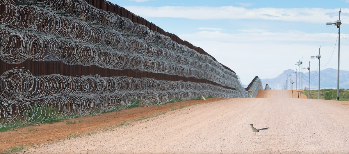 Greater Roadrunner Along the US Mexico Border Wall