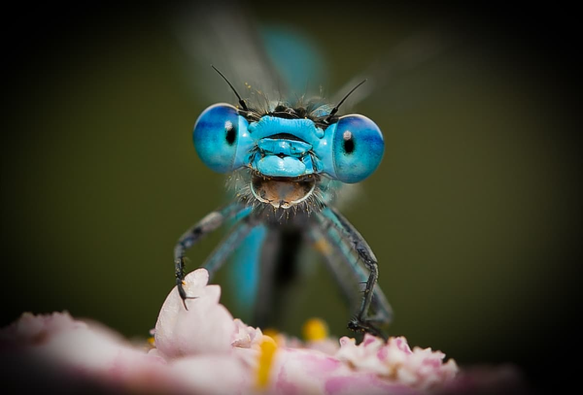 Dragonfly That Looks Like It's Laughing