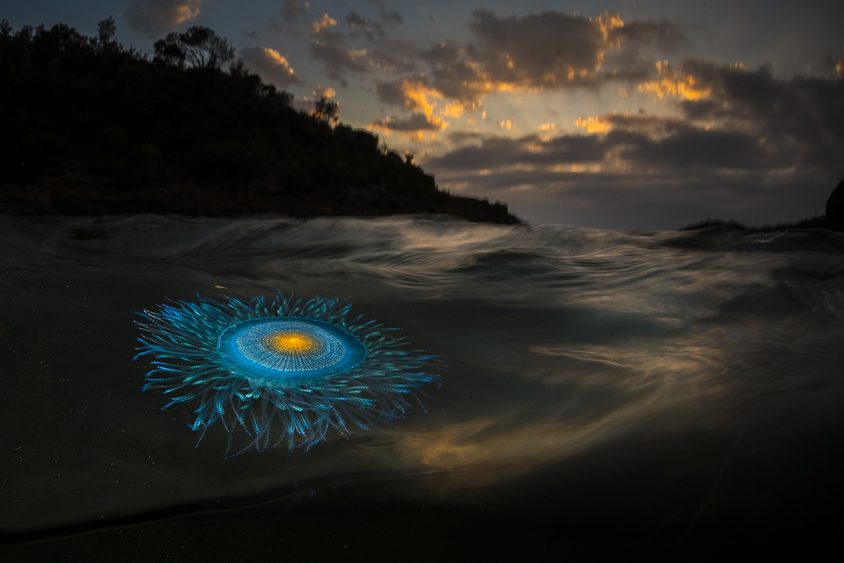 Explore the Stunning Photographs of the Ocean Photography Awards 2021 Finalists