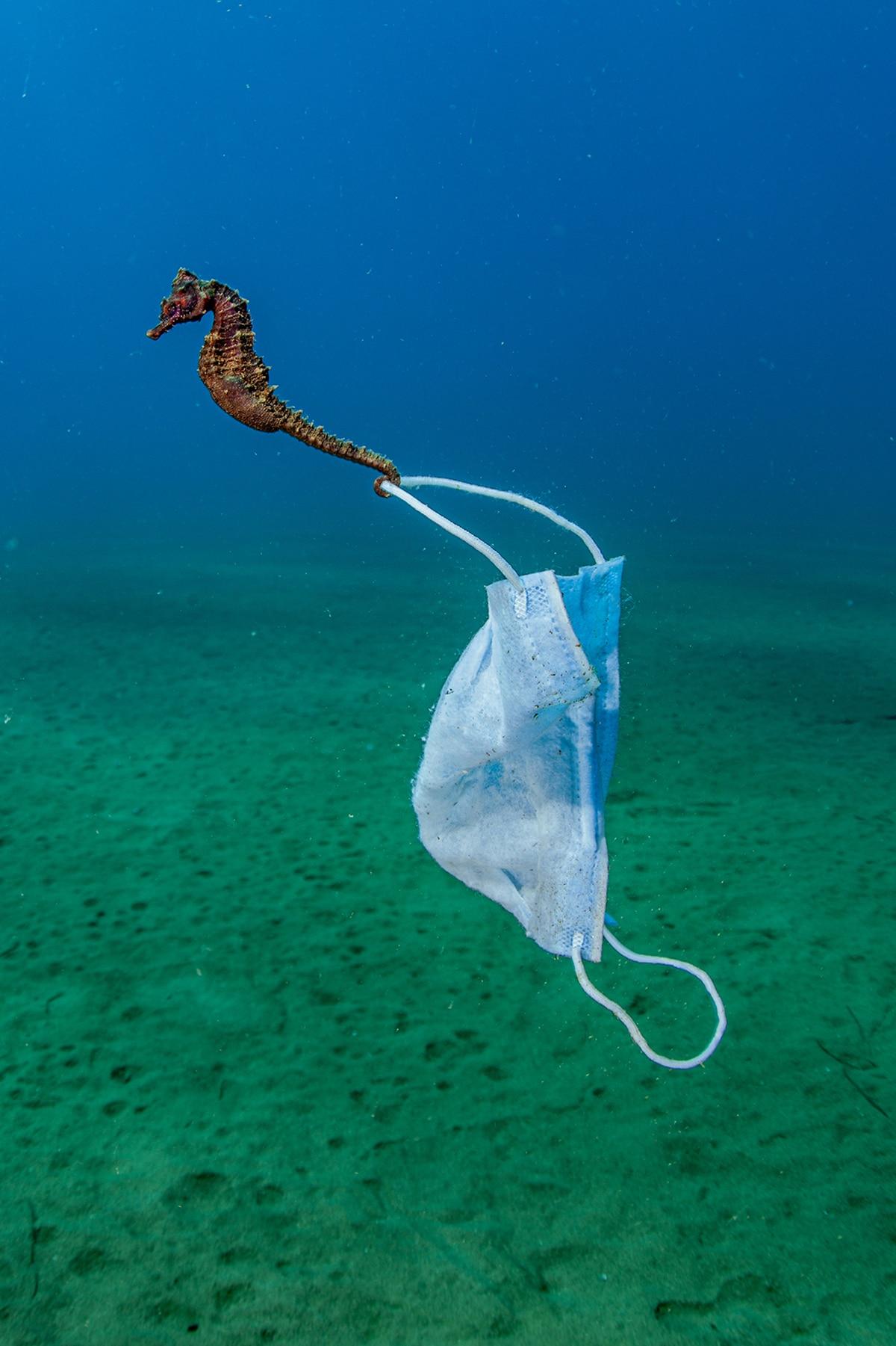 Nicholas Samaras Conservation Ocean Photo
