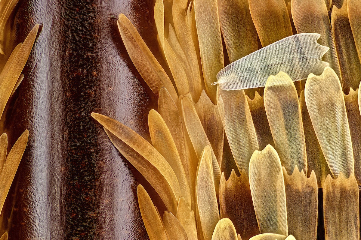 Close Up Photo of a Vein and Scales on a Butterfly Wing