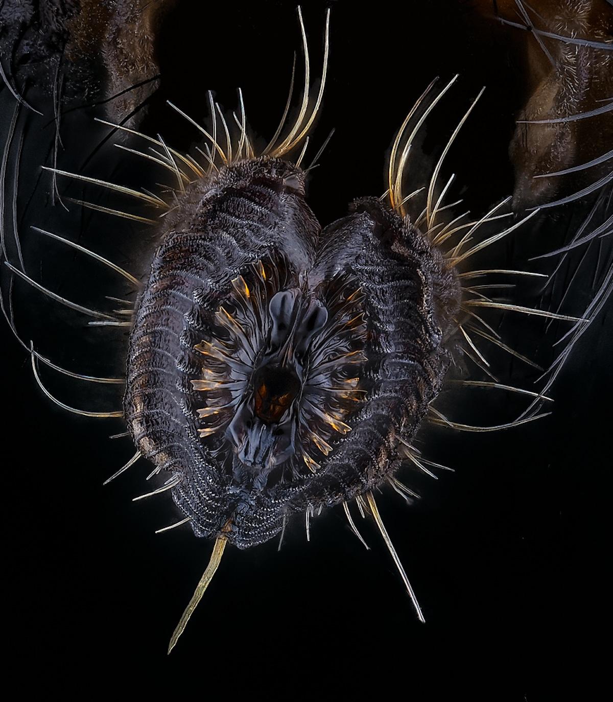 Close Up Photo of a Proboscis of a housefly
