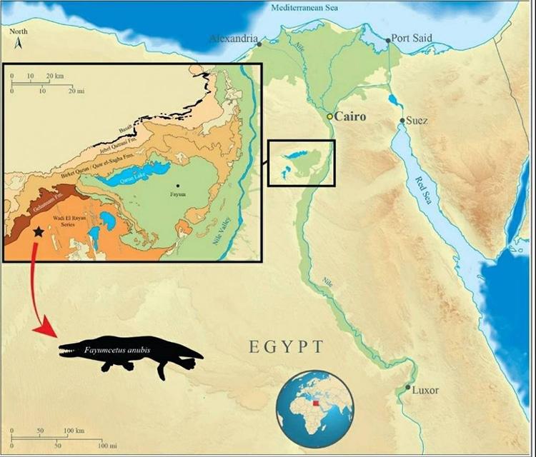 Anubis Ancient Whale