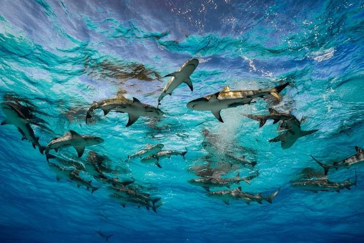 Sharks Shot by Cristina Mittermeier