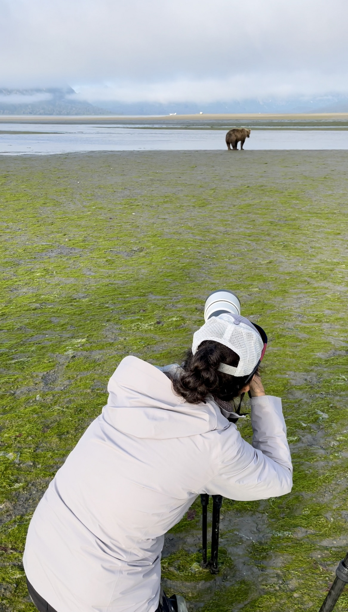 How to Photograph a Brown Bear