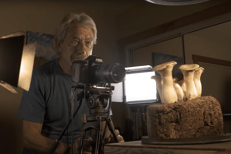 Louie Schwartzberg Filming Fantastic Fungi Time Lapse Video