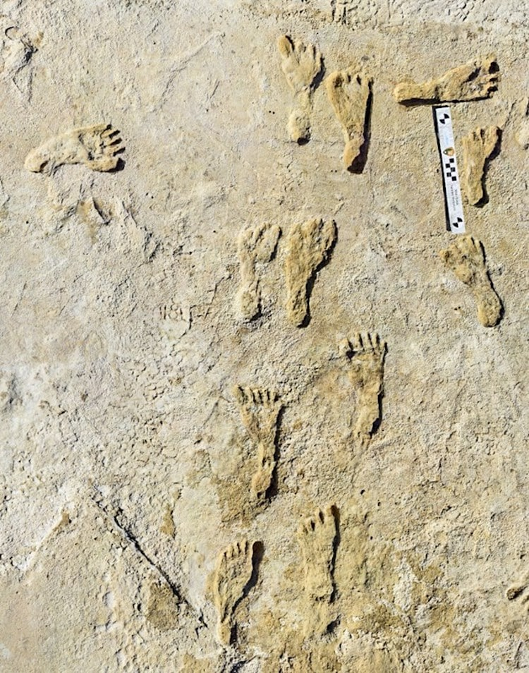Fossil Footprints From First Humans in North America Found at White Sands, New Mexico