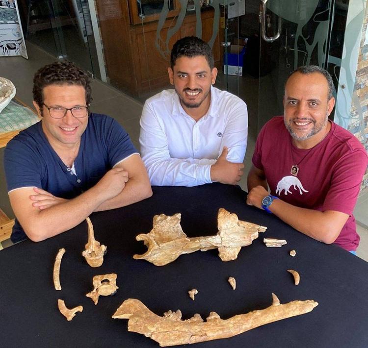 Paleontology Anubis Whale