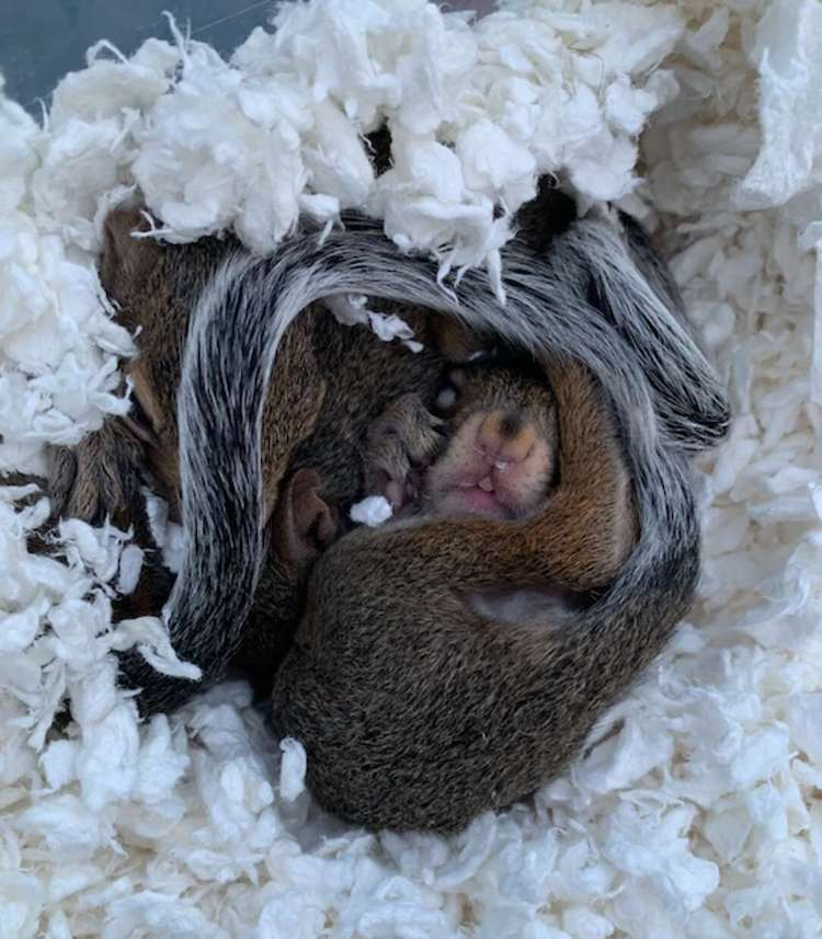 Teenager Bailee Villavaso Saves Orphaned Squirrels From Hurricane