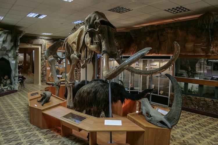 Woolly Mammoth Skeleton at the National Museum of Yakutsk