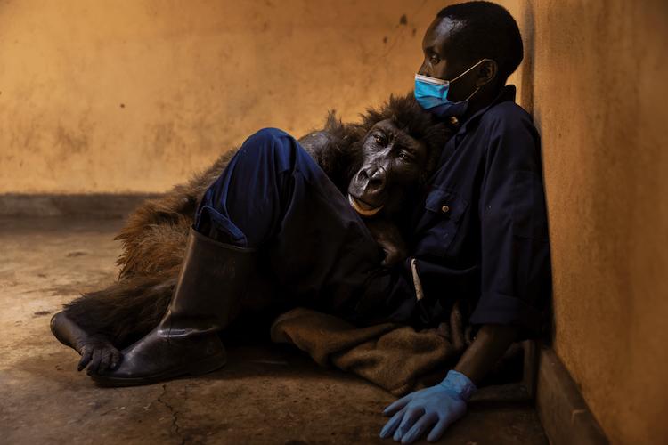 Ndakasi and Andre Bauma by Brent Stirton